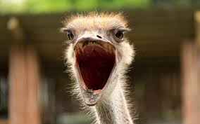 ostrich 10